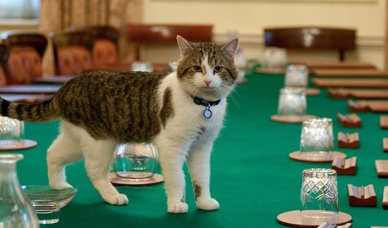 """Chú mèo hiệp sĩ Larry sẽ không bị """"xuống chức""""."""